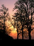 sunsetting with trees