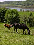 horses under the river