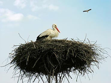 the arrival of storks