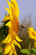 image gallery - bee